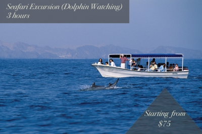 seafari excursion (dolphin watching) | 3 hours | starting from $75